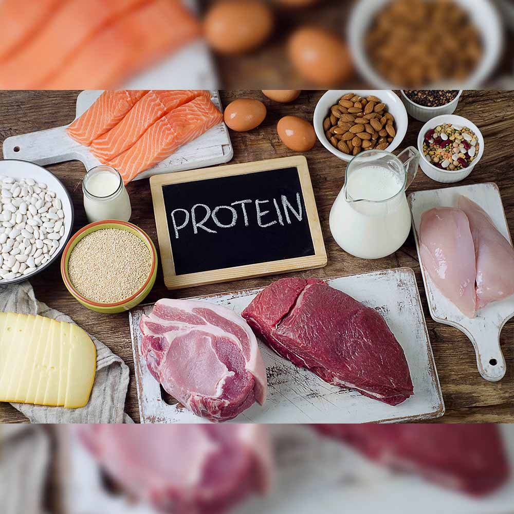 protein help the body to protect from pathogens