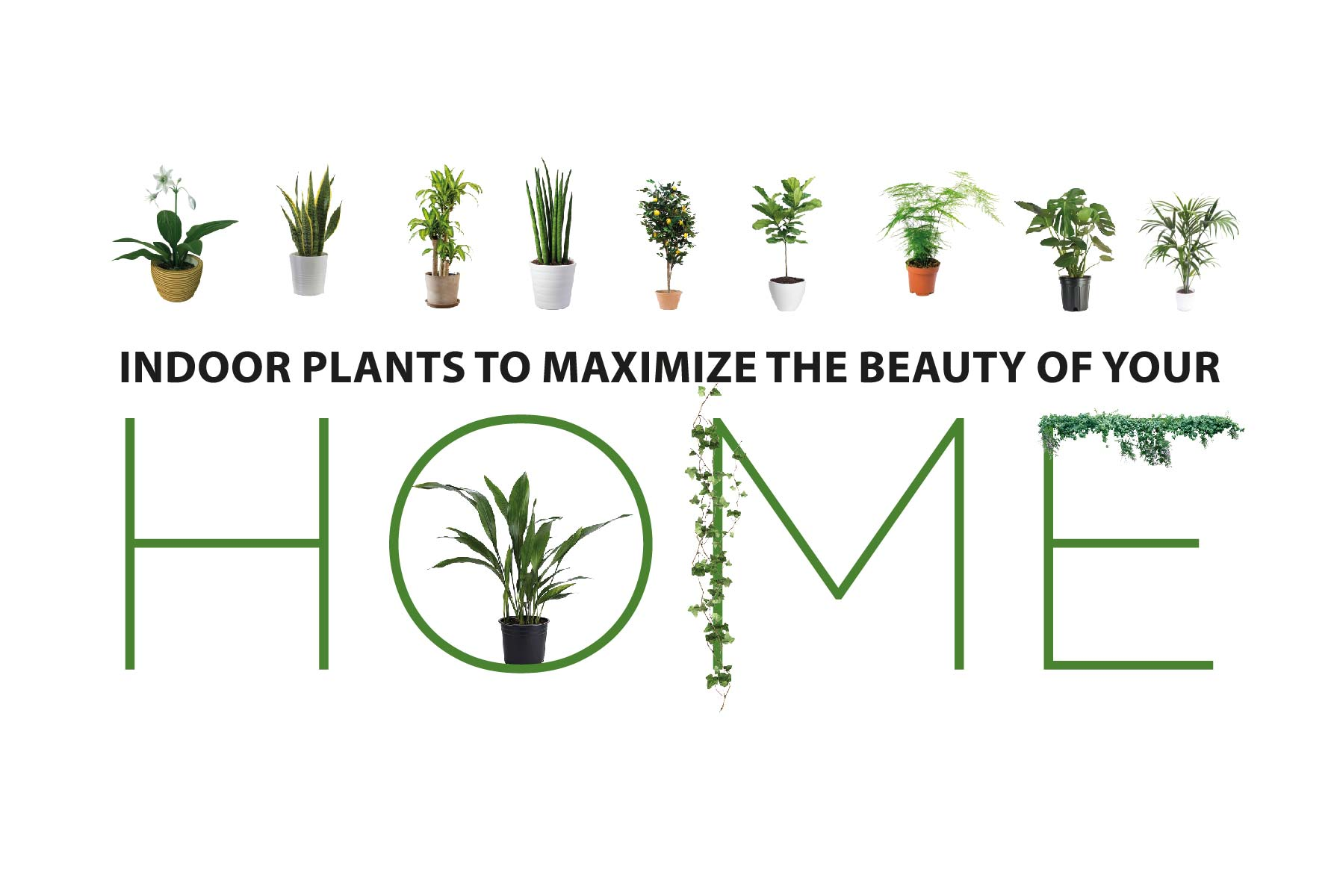 Indoor plants to maximize the beauty of your Home